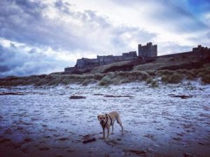 A frosty morning at Bamburgh Castle
