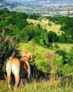 A Dog walk with a View at Crickley Hill Country Park, Cheltenham