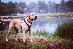 Hoover takes in Heron Pond