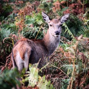 A young doe keeps her eye on us...