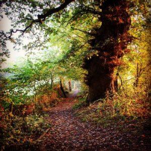 A Dog Walk through History at Runnymede in Surrey