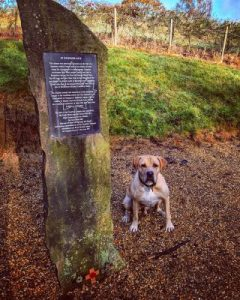 A Good, Long, Dog Walk on Bramshott Common in Hampshire